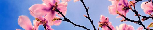 cropped-spring-tree1.jpg